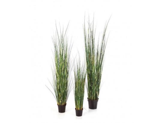 Bamboo Wild Gras